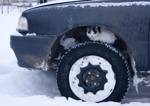 ?????� ?????�???�???�???�?�?�?? (Motor-Car Enthusiast Cat)